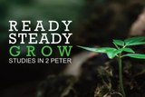 Ready, steady, grow